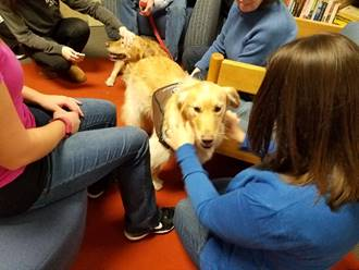Service dogs being petted by students and staff in the library.